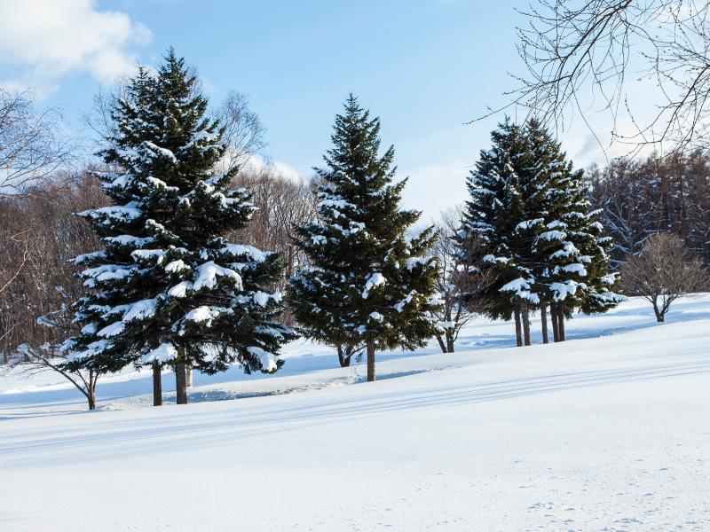 雪景色の画像