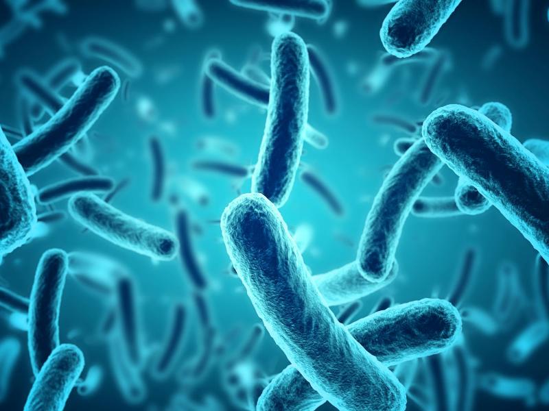 細菌の画像